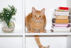 Gul katt med den långa svansen Royaltyfri Bild