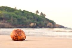 Gul kokosnöt på den exotiska stranden Fotografering för Bildbyråer