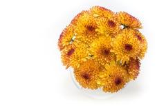 Gul krysantemum som isoleras på en vit bakgrund Arkivfoton