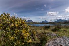 Gul kvast- och fjordBuine Moire, Skottland Arkivbilder