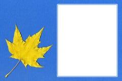 Gul lönnlöv på blått papper med utrymme för text Arkivfoton