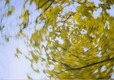 Gul lövverk på en naturbakgrund för blå himmel Royaltyfri Bild