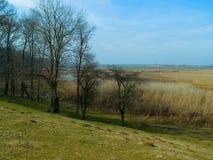 Gul landskapsand och träd Royaltyfri Fotografi