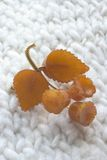 gul leaf royaltyfria foton