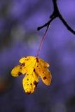 Gul leaf Arkivfoto