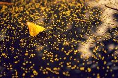 Gul Leaf Arkivbilder