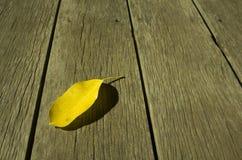 Gul leafbakgrund Royaltyfri Foto