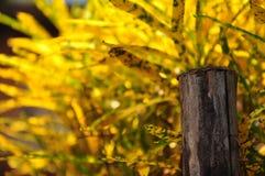 Gul leafbakgrund Arkivbild
