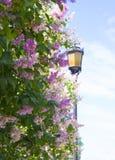 Gul lykta bak en blomstra lila arkivbilder