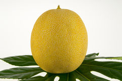 Gul melon Royaltyfri Foto