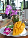 Gul mogen mango med kakan för mousse för grönt te för matcha Royaltyfria Bilder
