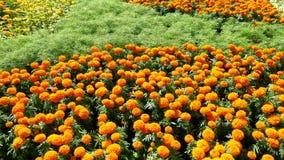 Gul och orange bakgrund för blommafält Arkivbild