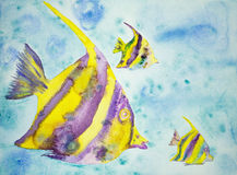 Gul och purpurfärgad fantasifisk Arkivfoton