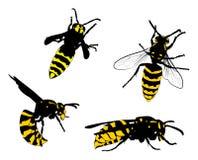 Gul och svart waspssamling stock illustrationer