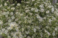 Gul och vit blomma i marknad arkivbilder