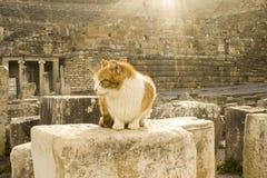 Gul och vit katt Fotografering för Bildbyråer