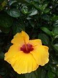 Gul orange röd blomma i trädgård arkivfoto