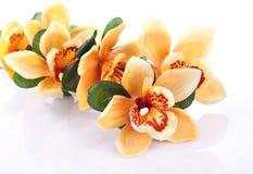 Gul Orchid Royaltyfri Bild