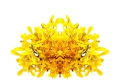 Gul Orchid Fotografering för Bildbyråer
