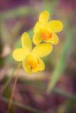 Gul orkidé i skog Royaltyfri Bild