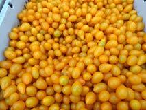Gul pärontomat, Solanumlycopersicum Fotografering för Bildbyråer