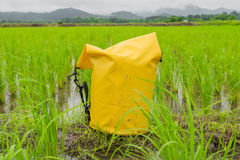Gul pålagd våt rårisjordbruksmark för torr påse arkivfoton