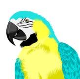 Gul papegoja Fotografering för Bildbyråer