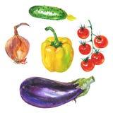 Gul paprikapeppar för vattenfärg, aubergine, lök, gurka och körsbärsröda tomater royaltyfri illustrationer