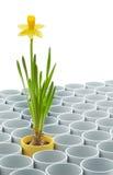 Gul pingstliljablomma- och blomkrukauppsättning Royaltyfria Foton