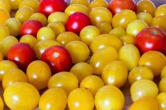 Gul röd tomat Arkivfoton