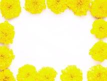 Gul ringblommablomma som isoleras på vit bakgrund Fotografering för Bildbyråer