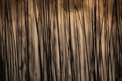 Gul sävmodell som växer på en textur för sjöbokehbakgrund Arkivbild