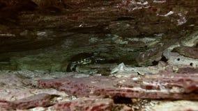 Gul sköldpadda i cenote för grottasjöYucatan mexikan arkivfilmer