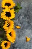 Gul solrosbukett på Grey Background Arkivbilder
