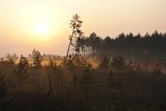Gul soluppgång Fotografering för Bildbyråer