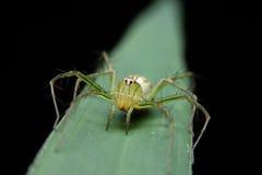 Gul spindel för makro Royaltyfria Foton