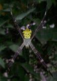 Gul spindel med härligt motiv Royaltyfria Bilder