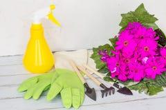 Gul sprejflaska, gummihandskar, trädgårdinstrument som blommar purpurfärgad färg för blomma Arbeta i tr?dg?rden, plantera och fol arkivbild