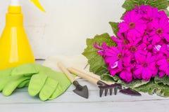 Gul sprejflaska, gummihandskar, tr?dg?rdinstrument som blommar purpurf?rgad f?rg f?r blomma Arbeta i tr?dg?rden, plantera och fol royaltyfri fotografi