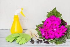 Gul sprejflaska, gummihandskar, tr?dg?rdinstrument som blommar purpurf?rgad f?rg f?r blomma Arbeta i tr?dg?rden, plantera och fol royaltyfria bilder
