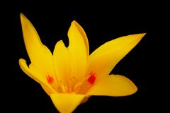 Gul stor blomma royaltyfri fotografi