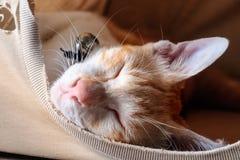 Gul strimmig kattkatt i brunt tält Arkivbilder