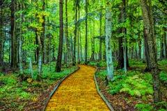 Gul tegelstenväg till och med skog fotografering för bildbyråer