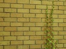 Gul tegelstenvägg Fotografering för Bildbyråer
