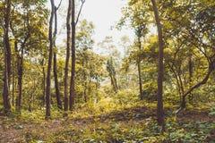 Gul trädskog Royaltyfria Bilder