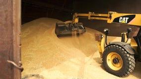Gul tracktor som laddar upp korn i hink stock video