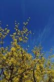 Gul tree Arkivbild