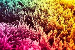 Gul Tricolor abstrakt bakgrund, grönt, rosa v?xter royaltyfri bild