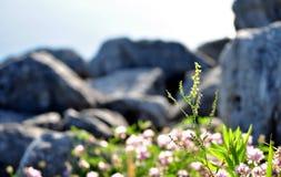 Gul vildblomma på kusten Royaltyfria Foton