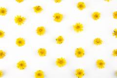 Gul Wedelia blommamodell Arkivbild
